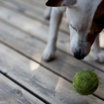 Dog-and-suspended-ball